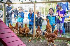 Pouliot Farm 2013-3 (melbaczuk) Tags: chickens canon kelowna chickencoop rampone donoray canon7d
