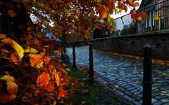 Autumn Oakshaw Colours (My finger parcialy obscures flash) (dddoc1965) Tags: autumn tree scotland photographer paisley oakshaw davidcameron dddoc positivepaisley pa12pu