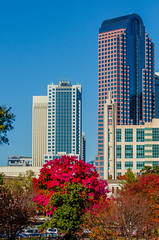 charlotte city skyline autumn season (AgFineArtPhotography.com) Tags: city autumn trees copyright plants usa fall skyline buildings season nc downtown cityscape charlotte seasonal towers northcarolina uptown ag metropolis copyrighted treecity