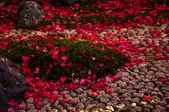 Eisho-in, Kyoto /  (Kaoru Honda) Tags: city autumn nature japan landscape temple japanese nikon kyoto traditional        redleaves higashiyama      konkaikomyoji   d7000  eishoin