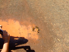 DSCF5616 (JohnSeb) Tags: brazil nature paran argentina rio brasil ro butterfly river waterfall nationalpark fiume rivire cataratas fluss iguazu iguaz cascada  iguau rivier johnseb  southamerica2012