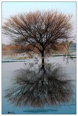Reflection (Pranay Soni) Tags: blue trees india reflection beauty birds mirror magic ngc gujarat wetland pranay thol thollake pranaysoni