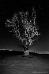 Ghost Tree (naturemomentsphotography) Tags: schnee winter nature night stars landscape schweiz switzerland nacht natur jura landschaft baum stimmung sterne lespresdorvin rolandbillmoser billsdownunderphotography
