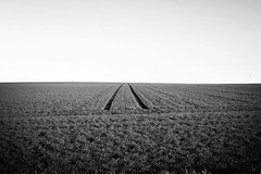 Tracks on a Field (Jaedde & Sis) Tags: bw field lines tracks minimalism vanishing friendlychallenges herowinner