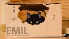 Emil fuer Dich (Oliver Pietern) Tags: cat canon germany deutschland kitty domestic nrw katze paws shelter suchen oberhausen tierheim homeles tierschutz katzenhilfe