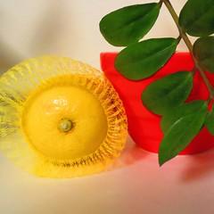 yellow, red, green (sonyacita) Tags: red green leaves yellow bag square leaf lemon bright mesh vivid bowl utata:project=ip193