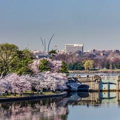 Cherry Blossom 2014 Tidal Basin AF Memorial (4myrrh1) Tags: tree canon cherry japanese rebel memorial blossom bloom cherryblossom airforce blooming t3i tidalbasin cherryblossomfestival