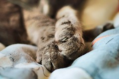PAWS (strangehat) Tags: camera orange sun white animal zeiss cat canon lens fur photography 50mm bed bedroom aperture photographer room jena claw carl m42 28 paws dslr duvet tessar zeis oldlens 60d uploaded:by=flickrmobile flickriosapp:filter=nofilter