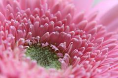 Pretty in Pink (Jamie-Owens) Tags: