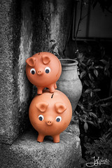 Piggybank (JGF Photo) Tags: bw white black byn blanco rural negro bn pigs desaturation pottery piggybank cermica cerdos hucha desaturacin