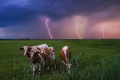 Holy Cow! (albert dros) Tags: storm netherlands dutch landscapes countryside cows nederland lightning thunder extremeweather supercell albertdros