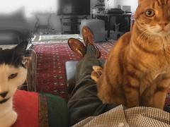 Suppertime? (A.Davey) Tags: dot elsie rescuecats blackandwhitecat orangecat