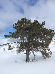 Utvikfjellet (boldmarflakne) Tags: norway norge nordfjord sandane oppstryn utvikfjellet folkemuseum fjord noruega vinter fiordo winter invierno ノルウェー 挪威 노르웨이 norwegen norvege norja
