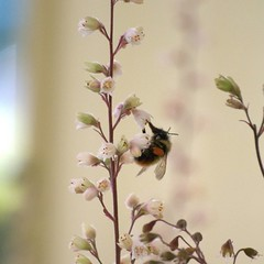 Remember summer? Here's a photo of a bee I took in Vancouver Island in 2010