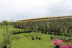 Végétales épicuriennes 2016