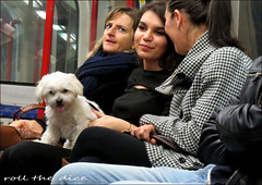 `1917 (roll the dice) Tags: london tfl oyster tube underground pet animal streetphotography girl crowd pretty sad mad surreal funny lap classic art uk england urban londonist unaware seat unknown carriage passengers people portrait hot strangers candid canon tourism dirty chat centralline fashion shops shopping window roundel tongue girls