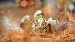The egg is hatching (Explored) (Aadilos) Tags: macromondays macro egg eggs hatching easter macromonday nikon d5200 sigmaminiwide2 sigma manualfocus bokeh