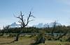 Torres del Paine National Park (Roelie Wilms) Tags: torresdelpainenationalpark torresdelpaine chile chili chileanpatagonia patagonia patagonië cuernosdelpaine