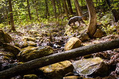 Untitled (V. Correa) Tags: travel trees nature 35mm landscape photography spring nikon vermont hike pitbull trail