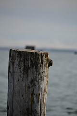 Piling on. (P.Woolley) Tags: beach capecod massachusetts shoreline falmouth