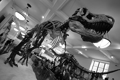 New York City 32 (gsamie) Tags: nyc newyorkcity blackandwhite usa newyork museum canon skeleton manhattan unitedstatesofamerica naturalhistory tyrannosaurus t3i 600d gsamie guillaumesamie