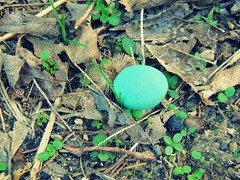 Robin's Egg (CapturingPeace) Tags: blue plants bird nature robin forest sticks weeds natural egg ground robinsegg blueegg