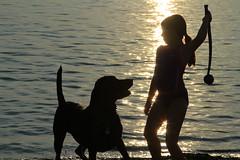 The Black Labrador (Bill Dahl 2 Million+ Views Club) Tags: black dogs labrador blacklab dogphotography blacklabrador petphotography billdahl billdahlphotography photographybybilldahl photosbybilldahl