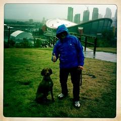 #249 (maddockmusings) Tags: dog calgary rain downtown vizsla hungarian