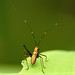 "Jungle Cricket I • <a style=""font-size:0.8em;"" href=""http://www.flickr.com/photos/101688182@N03/9784932736/"" target=""_blank"">View on Flickr</a>"