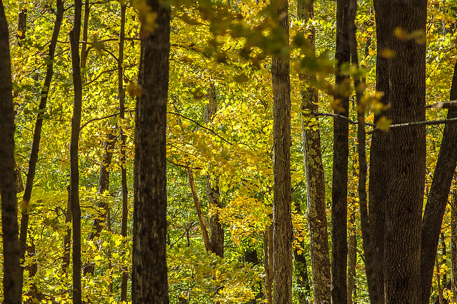 Tecumseh Trail - Yellowwood State Forest - October 2013