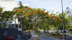 Southport / Gold Coast (haphopper) Tags: street flowers red tree green nature town australia qld queensland southport goldcoast  ool 2013