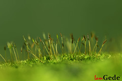 Mossy Forest (De Partha) Tags: moss lichen macrophotography