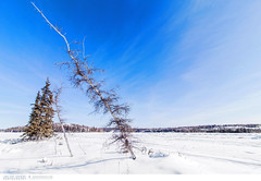 Landscape at Vee Lake close to Yellowknife (Vincent Demers - vincentphoto.com) Tags: voyage trip travel blue trees winter sky snow canada cold tree nature forest landscape outdoors hiver north nwt bluesky bleu trail ciel evergreen northamerica neige northwestterritories paysage extrieur arbre froid fort nord clearsky sapin yellowknife naturetrail randonne pleinair cielbleu travelphotography northof60 veelake amriquedunord conifre traveldestination paysagedhiver photographiedevoyage wintrylandscape northofcanada territoiresdunordouest nordducanada travellocation destinationvoyage
