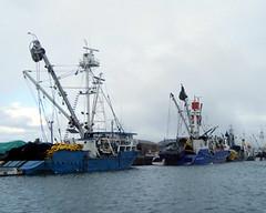 Chinese Tuna Boats