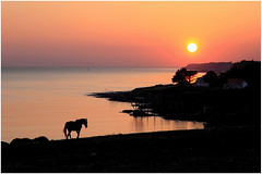 Cheval (rogermarcel) Tags: ocean sunset horse orange cheval silouhette ruby5 rogermarcel