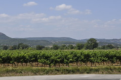 Vignes à Tornac