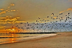 Vilamoura/Algarve (Zéza Lemos) Tags: sunset sol praia portugal water água canon mar tramonto barcos gaivotas natureza ngc natur céu nuvens algarve vilamoura ondas puestadelsol pordesol