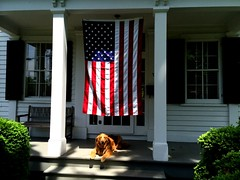 Happy Memorial Day (FBJDcollector) Tags: usa love home dogs living flag country best explore patriot july4th independenceday goldenretreiver