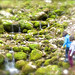 Excursiones guiadas por Asturias