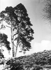 Heelsum winterse Koninginnelaan Collectie HGR (Historisch Genootschap Redichem) Tags: collectie heelsum hgr koninginnelaan winterse