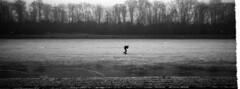 The Lone Skater (selyfriday) Tags: selyfriday wwwnassiocomempty nassiocom xpan hasselblad rangefinder 35mm analogue panorama 45mmf4 believeinfilm 2 711 ishootfilm 135 filmisnotdead hasselbladxpan kodak kodaktmax100 tmax100 100iso t x100 rodinal 1100 1hourstand 4ml 22˙c lines amsterdam amsterdamsebos skater woods forest nederl netherlands holland dutch