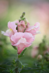 Macro Pink (Desertbloom Photography) Tags: flowers lowes macro121016 canon6d canon100mm28l