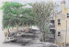 Point St Pyrmont (Peter Rush - drawings) Tags: trees tree st point sketch quiet sydney peaceful australia architect peter shade rush nsw pyrmont