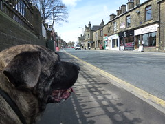 Hooch (The Chairman 8) Tags: road dog canine highstreet hooch queensbury