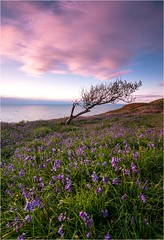 Sentinel (Adam Evans (ffaffman)) Tags: sunset bluebells wales coast spring nikon ceredigion d300