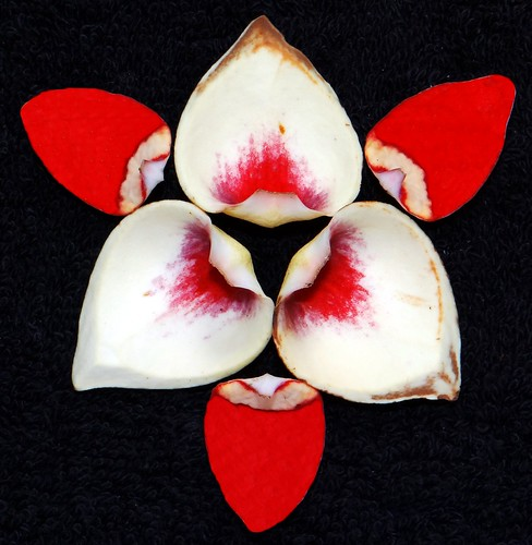 Pond Apple  #12: FLOWER PETALS