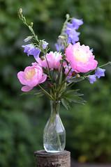 2013-06-20 - zomerboeket, 07 (Alfred Elkerbout) Tags: flowers tuin bloemen achtsebarrier