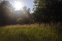 that summer sunshine (christiaan_25) Tags: trees light summer sky sun sunlight green field grass sunshine warmth flare