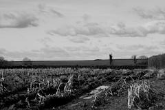 Desolate (RoryMontague) Tags: winter dark dead puddle cut empty country apocalypse hills desolate