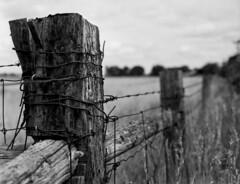 Wood And Wire (Blia100) Tags: film grain delta 100 ilford 75mm filmphotography ilforddelta100 rodinal1100 bronicaetrs epsonperfection4990 bwfp zenzanon75mmf28peasperical